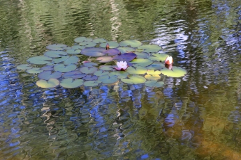 Steamboat Springs Lily Pond Photograph by Lynn S. Schwebach.